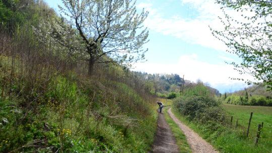 Report passeggiata didattica botanica a Genazzano