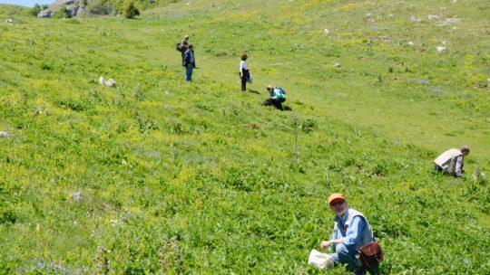 Relazione escursione botanica a Vallepietra del 28 maggio 2017