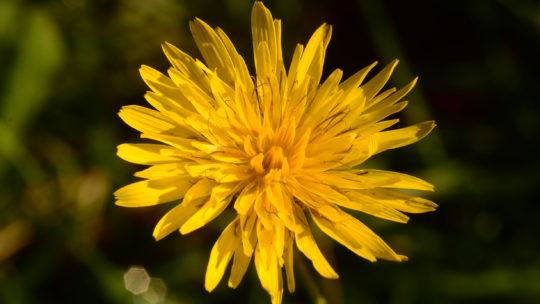 Le ricette con erbe spontanee: antipasti