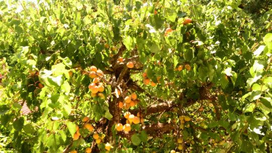 I frutti selvatici commestibili