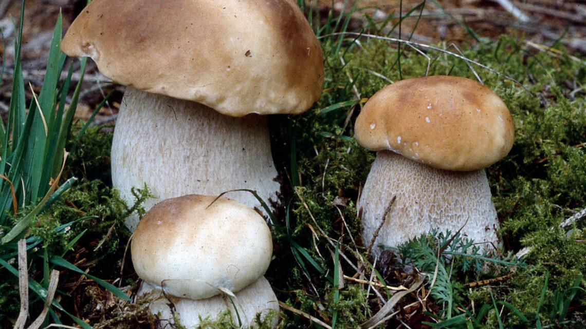 Raccolta funghi nel Lazio: le regole del 2021