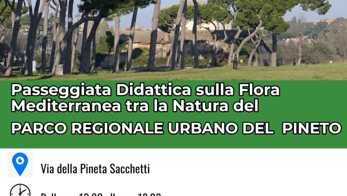 Passeggiata didattica al Parco del Pineto – 16 ottobre 2021